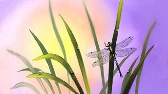 "Wilson Bickford ""Dragonfly"" Part 2 (Season 3)"