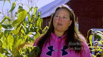 An Amazing Corn Maze