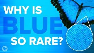 S5 Ep11: Why Is Blue So Rare In Nature?