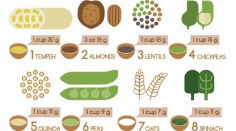 Healthy Families | Plant Proteins