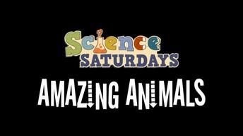 Science Saturdays - Amazing Animals