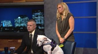 Service Dogs Helping Veterans at Berkeley College