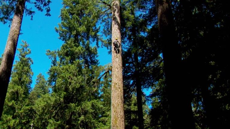 Oregon Field Guide: Search For Oregon's Tallest Tree And Wallowa Mule Packer