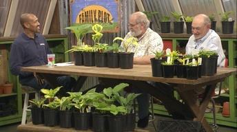 Hostas & Soil Prep