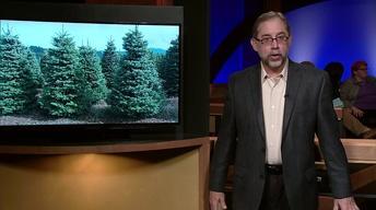 Mark DePaolis Essay | Christmas Tree Shortage