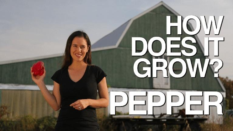How Does It Grow: Pepper