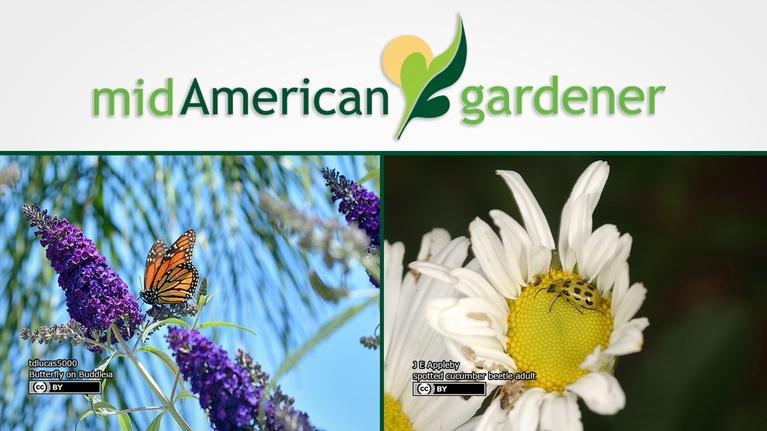 Mid-American Gardener: Mid-American Gardener with Sandy Mason October 19, 2017
