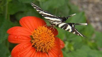Season Premiere: Butterflies and More!