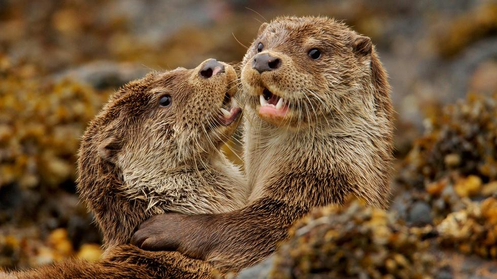 Charlie & the Curious Otters image