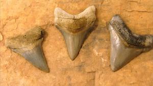 Fossil Fields