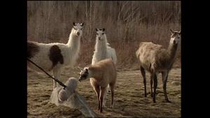 Logging/Educ/Llamas