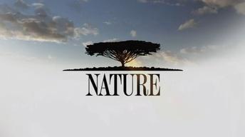 "Nature 3313 ""Animal Reunions"""
