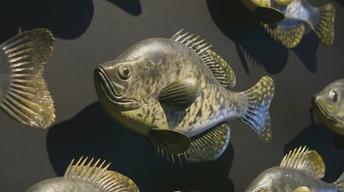 Fish Carver