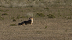 Hunting Dogs, Swift Foxes & South Llano Leisure