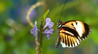S36 Ep12: Sex, Lies and Butterflies