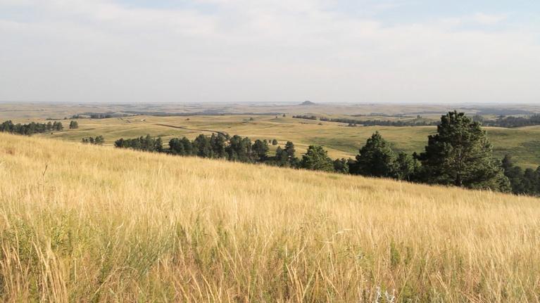 Recovering Lakota Culture
