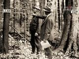 American Experience | America's Timber