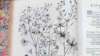 "Appraisal: 1613 Basilius Besler ""Hortus Eystettensis"""
