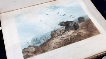 Appraisal: Maximilian & Bodmer Atlas, 1842-43