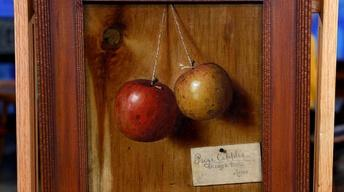 "Appraisal: De Scott Evans ""Prize Apples,"" ca. 1880"