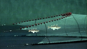 graphic illustrating fish swimming into a net