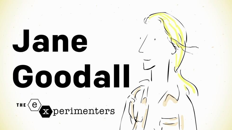 Jane Goodall on Instinct image