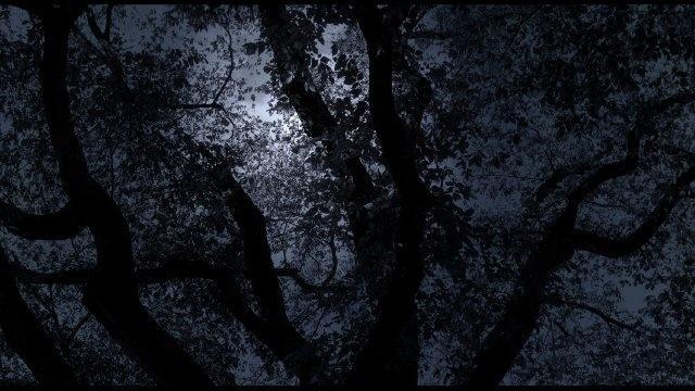 Central Park Five Trailer