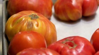 S1 Ep5: Tomato Pie