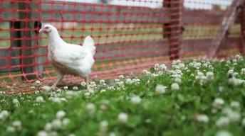 S2 Ep11: Chicken Lickin'