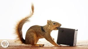 Watch These Frustrated Squirrels Go Nuts!