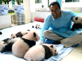 EARTH A New Wild | EARTH A New Wild | Pandas