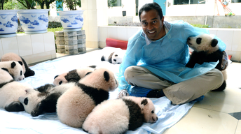 China's Panda Problem