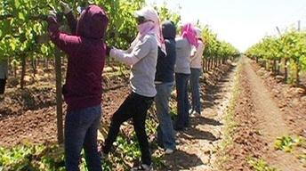 California: The Immigration Dilemma image