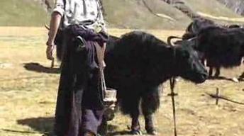 Tibet: Eye Camp