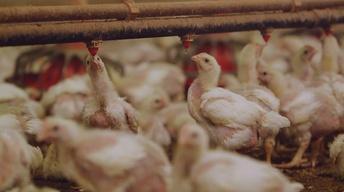 S33 Ep1: The Trouble with Antibiotics