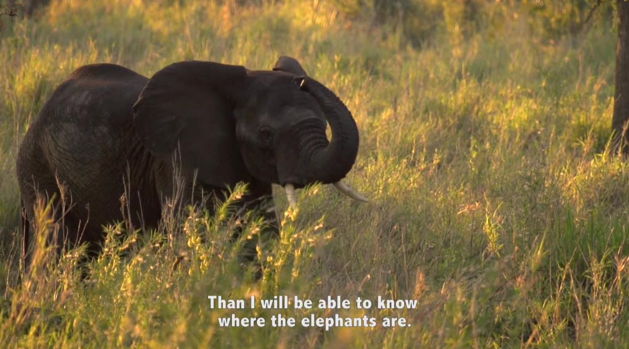 Facing Fears of Elephants
