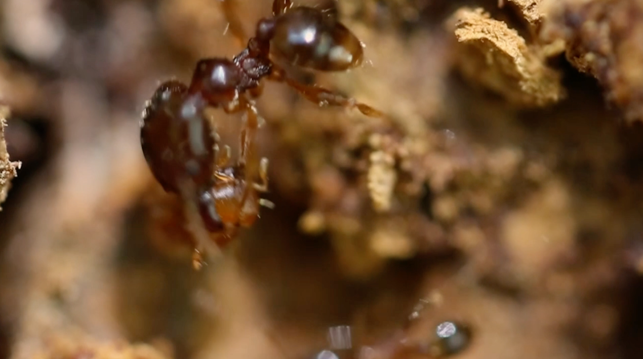 Ants That Can't Walk