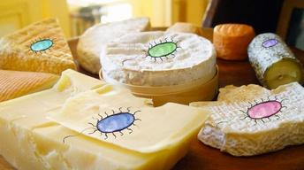 S1 Ep12: What Lives In Cheese?