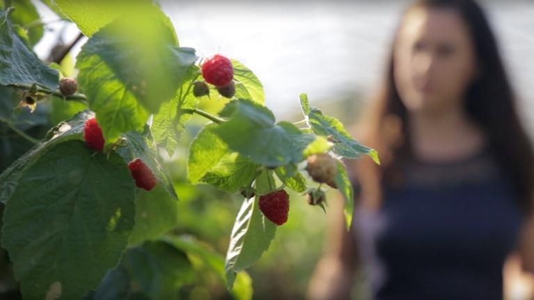 How Does it Grow? Raspberries