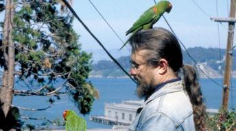 The Wild Parrots of Telegraph Hill - Trailer