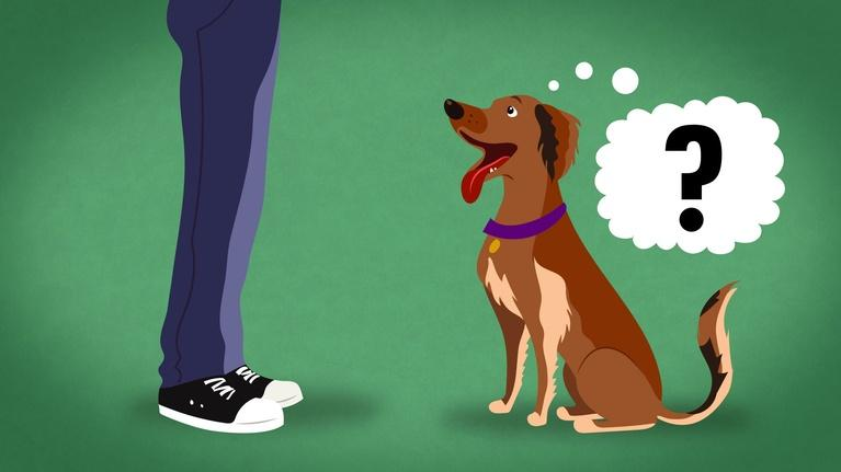 S1 Ep38: Does My Dog Know What I'm Thinking?