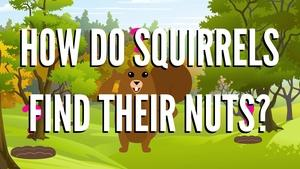 How Do Squirrels Find Their Nuts?