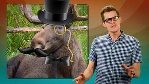 S3 Ep45: Why Don't Other Animals Wear Glasses?