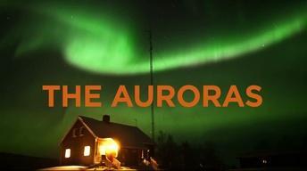 The Auroras