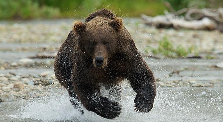Katmai: Alaska's Wild Peninsula: Katmai: Alaska's Wild Peninsula