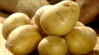 What Potato Makes the Best Mashed Potato?