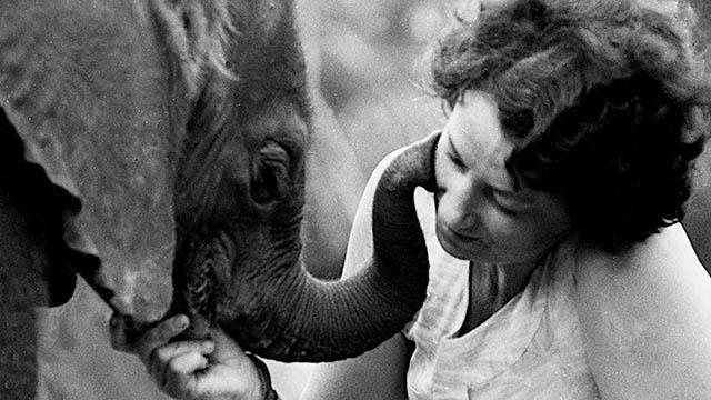 The Elephant Who Found a Mom