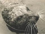 My Wild Affair | The Seal Who Came Home