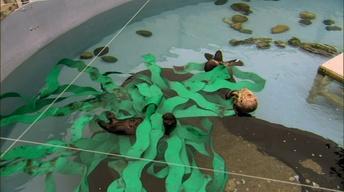 Saving Otter 501: Intro of Toola