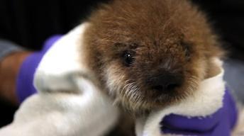 S32 Ep7: Saving Otter 501